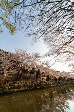 Omi Hachiman cherry blossoms with beautiful patterns Reklamní fotografie