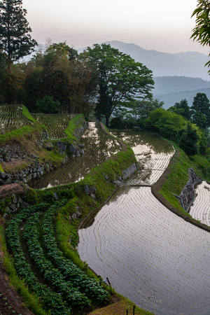 A scene where the curved rice terraces shine