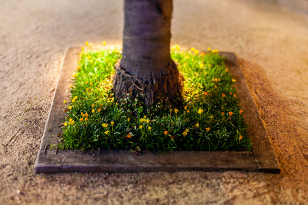 Flowerbed photographed in a miniature style