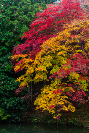 Autumn Emeishan, visiting the autumn leaves #4 Banco de Imagens