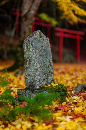 Autumn Emeishan, visiting the autumn leaves #5 写真素材