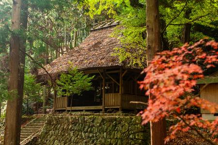 Autumn Emeishan, visiting the autumn leaves #17