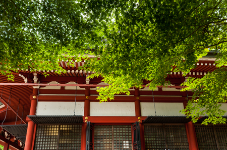 Mt. Hiei, the green of Momiji at Enryaku-ji Temple Stok Fotoğraf - 122050266