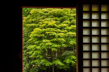 Mt. Hiei, trees seen from the room of Enryaku-ji Temple