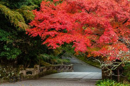 Fiery autumn leaves of Hiyoshi Taisha 写真素材 - 122051021