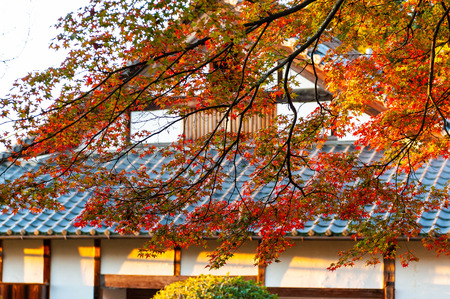 Autumn leaves of the Saikyoji Temple that shines in the morning sun Stok Fotoğraf
