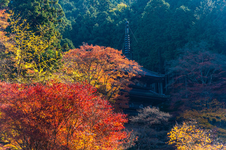 tower and autumn leaves of Takagenji