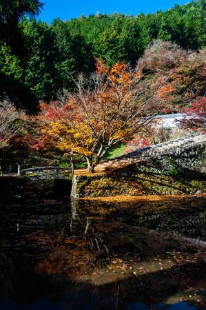 Vivid autumn leaves of Entsu-ji Temple Banco de Imagens