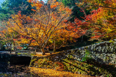 Autumn leaves and oblique lights of Entsu-ji Temple Banco de Imagens