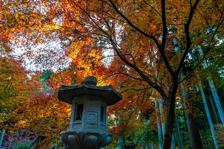 A lantern covered with autumn leaves
