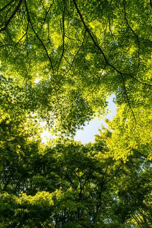 Vivid fresh green and blue sky and sunshine