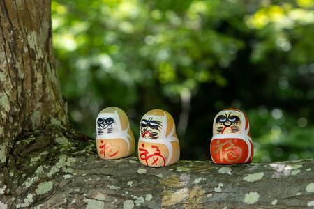 Three Dharma placed on a tree branch Banco de Imagens