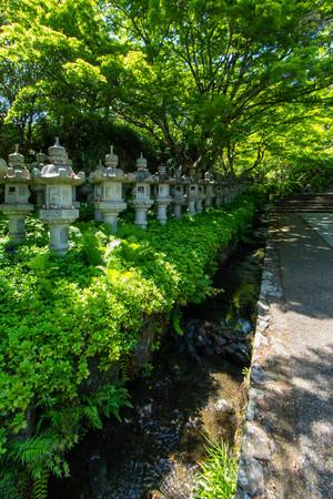 Vivid fresh green and regularly arranged stone lanterns