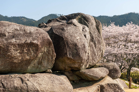 Building made of megaliths and cherry blossoms