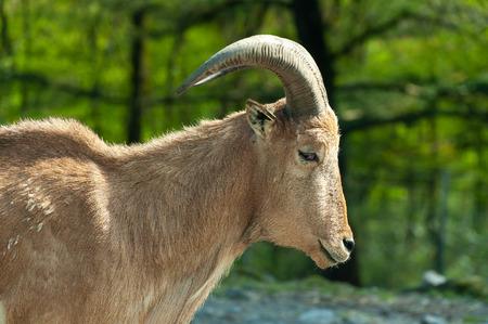 Safari Park animals with interesting shapes of horns 版權商用圖片