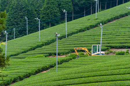 Tea field and blower and shovel
