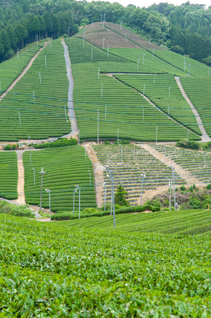 Tea plantation efficiently made on the slopes