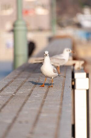 Seagull watching here in the port town of the Seto Inland Sea 版權商用圖片