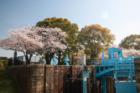 Cherry blossoms and blue structures