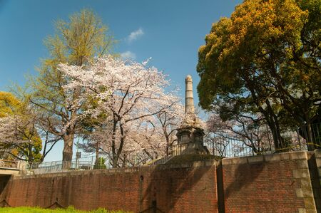 Cherry blossoms and tower and brick wall