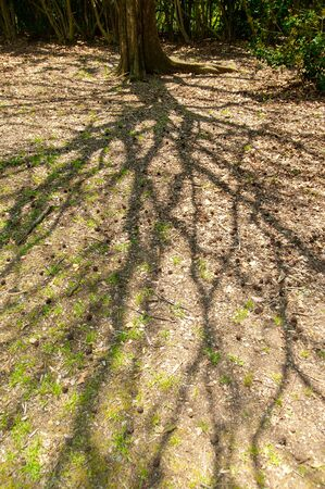A tree that produces a large shadow Imagens