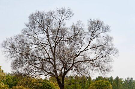 Beautifully shaped trees Stok Fotoğraf
