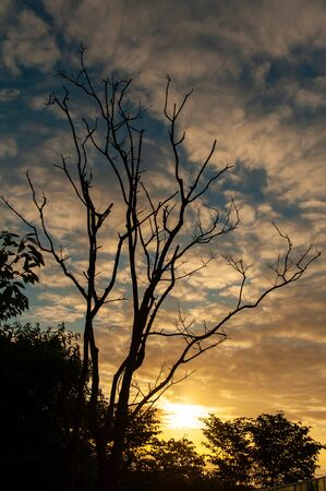 Sunrise and tree of interesting shape Imagens