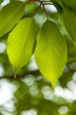Seed-through leaf in a leaf through a tree Stok Fotoğraf