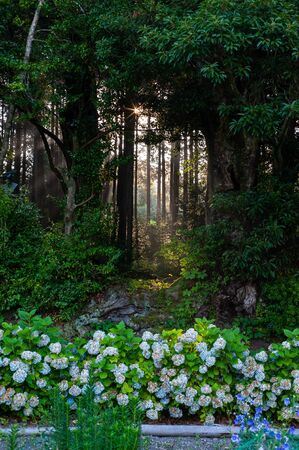 Sunlight Forest and Hydrangea