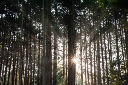 Kameoka Forest where beautiful sunbeams occurred