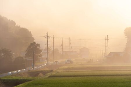 Road with telephone pole wrapped in morning mist