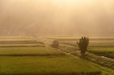 Kameoka countryside surrounded by morning mist Imagens