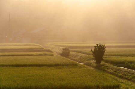 Kameoka countryside surrounded by morning mist Stok Fotoğraf