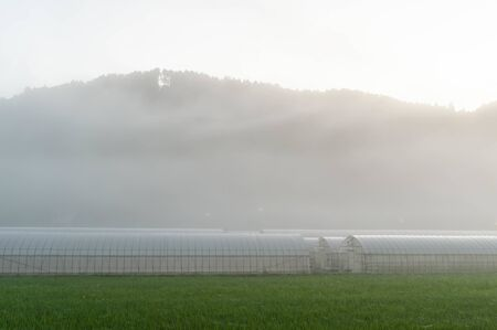 Morning mist and vinyl house in the countryside of Kyoto