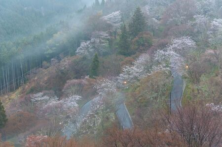 Curved road on Mt. Yoshino in Nara where morning glaze occurs Stok Fotoğraf
