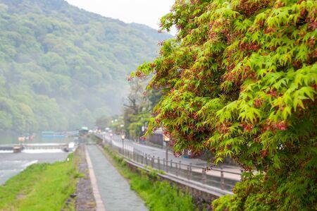 Arashiyama gets wet in the early morning rain