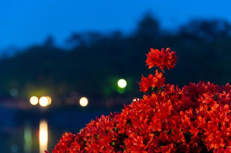 Nagaoka Tenmangu shrine and lighting in the early morning when azaleas bloom
