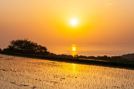 Vast rice fields,  and Lake Biwa Stockfoto