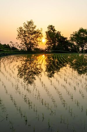 Orange sky reflected in  and paddy field