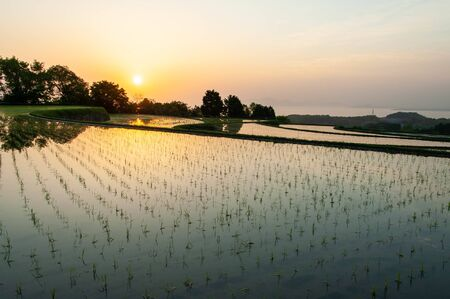 sky reflected in vast rice fields Stock Photo