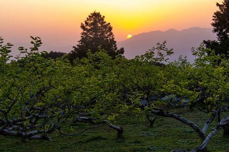 Nara vineyard and orange sunrise