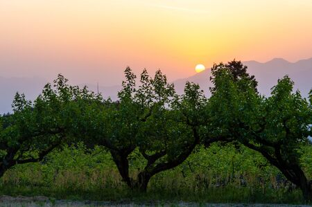 The rising sun over the Nara vineyard