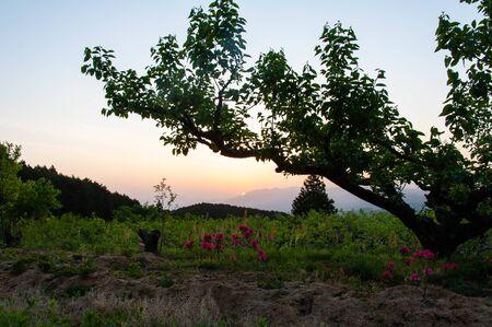 Nara trees, fields and Asahi