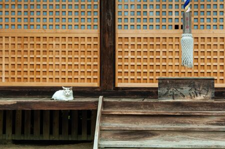 A cat resting in front of a shrine 写真素材