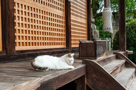 White cat relaxing at the shrine