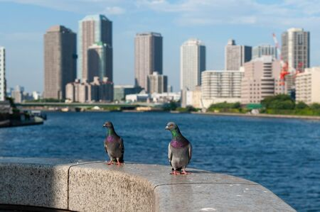 Two pigeons looking at high-rise buildings