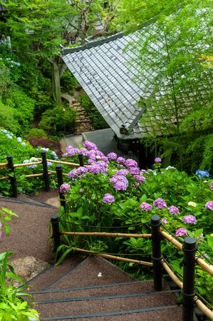 Japanese style roof, steep stairs and hydrangea 写真素材