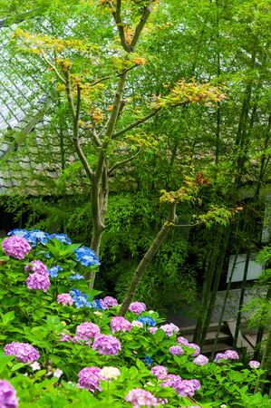 Japanese style roof and hydrangea on the slope