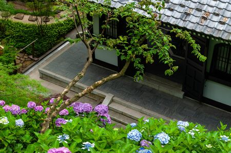 Japanese architecture and hydrangea blooming on the slope