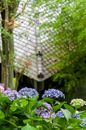Japanese style roof and hydrangea flowers